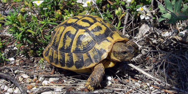Types of Tortoise for Pets – Find Your Favorite
