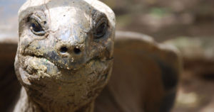 how long do tortoises live