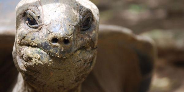 How Long do Tortoises Live? The Life of a Tortoise